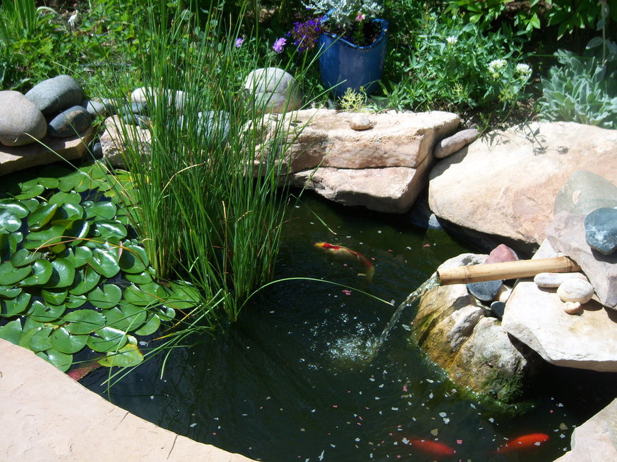 Small ponds growing water plants in them keeping them for Maintaining a garden pond
